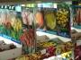 Cebulki kwiatowe